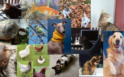Pets & Holidays
